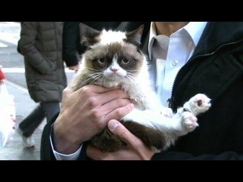 Grumpy Cat Interview 2013 on 'GMA': 'No' Meme Feline's Exclusive Video