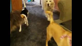 Group of Diverse Dogs Run Into Room