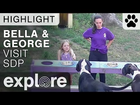 Bella and George visit the Service Dog Project - Live Cam Highlight