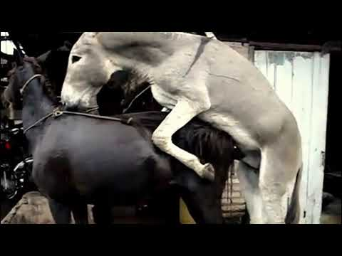 Xxx Mp4 Funny Horse Mating Funny Horse Mating With Donkey 3gp Sex