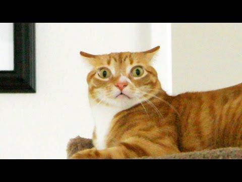 Understanding Your Cat's Emotions