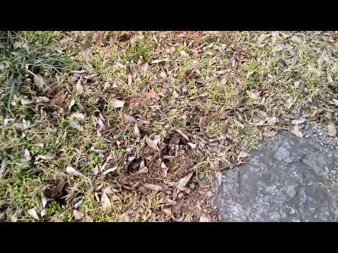 Holes in my yard