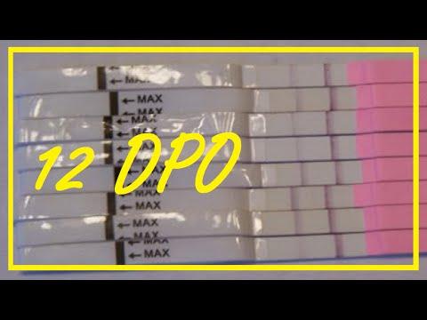 OPK AS HPT- TWINS? OVULATED TWICE?? TWICE THE HORMONES? 12 DPO Cycle 1 TTC#1