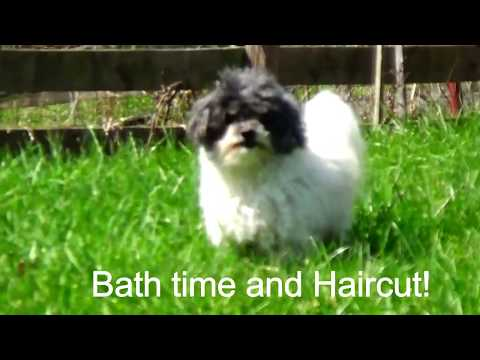 DOGS HAIRCUT AND BATH TIME! Fluff pups makeover!
