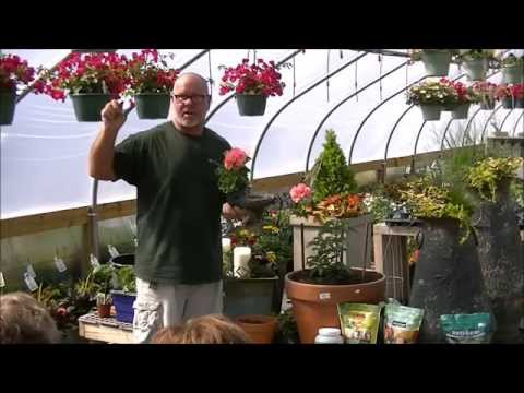 Container Gardening Geranium Pot
