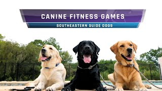 Canine Fitness Games