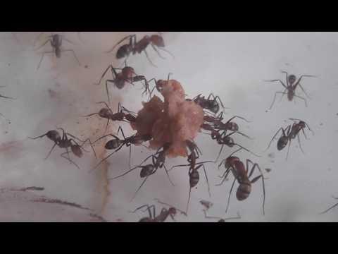 Ants love dog food