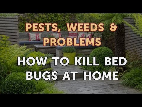 How to Kill Bed Bugs at Home