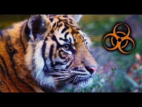 Taronga Zoo Sydney Australia - Part One - big cats, spiders,