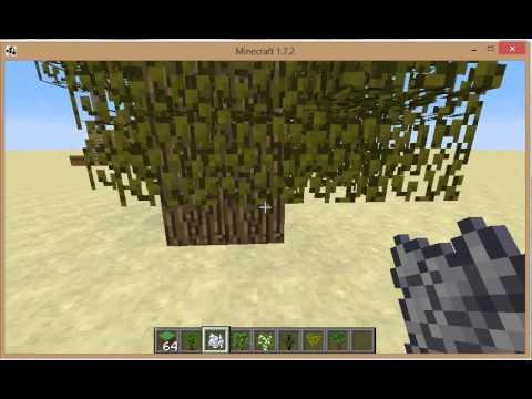 How to grow 4 saplings into a big tree