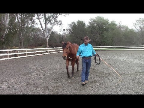 Teach Your Horse Respect for Your Personal Space, Mike Hughes, Auburn California