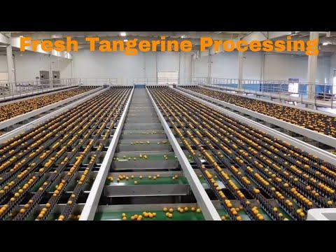 Fresh tangerine grading and binning