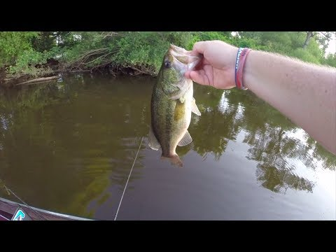 Topwater Bass Fishing with the Sprinker Frog