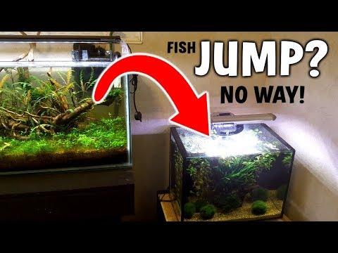 EPIC FISH JUMP? No Not Really...