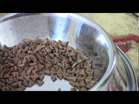 Pinellas Pest Control How To Protect The Dog Food Dish From Ants