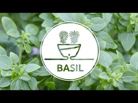 How To Plant Basil in an innovative Self-Watering pot CALIPSO by Santino