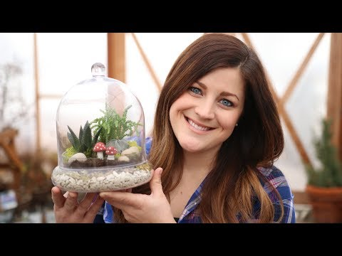 Succulent Terrarium | Trying Out Hydro Stones 🌿🌵🍄 // Garden Answer