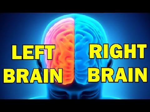 Are You Left Brain or Right Brain ?