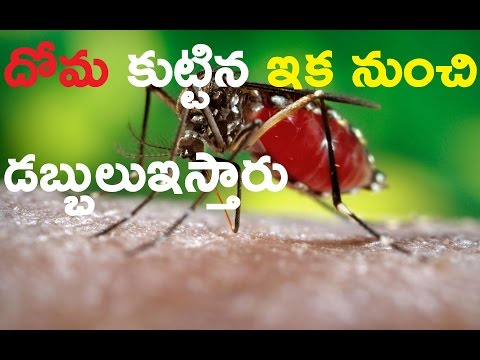 Mosquito byte is also accident / Ttube Telugu