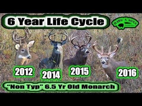Hunter Education Hunting Whitetail Deer