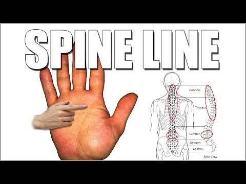 SPINE LINE Male Palm Reading   Palmistry #177