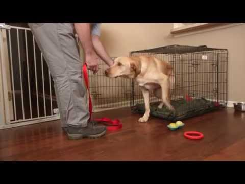 Mikkel Becker S Top Tips For Crate Training An Adult Dog