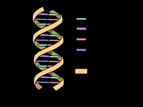 DNA Structure with Double helix model