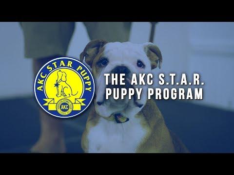 AKC S.T.A.R. Puppy Program