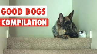 Good Dogs Video Compilation 2016
