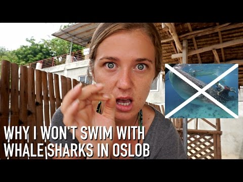 WHY I WON'T SWIM WITH WHALE SHARKS IN OSLOB, PHILIPPINES