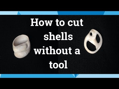 How to cut seashells without a tool