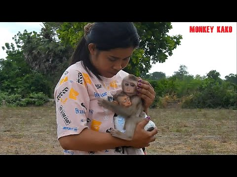 Orphan Baby, Monkey Luna Take Care And Hugging Baby Nina Follow Mother At Farm Field