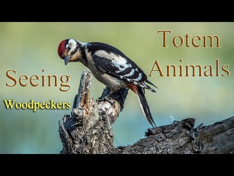 Totem Animals: The Meaning of Seeing Woodpeckers: Symbolism