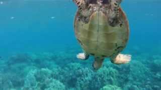 GoPro Snorkeling in Hawaii in HD (Napili Bay and Ka