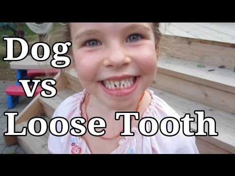 Dog vs Loose Tooth