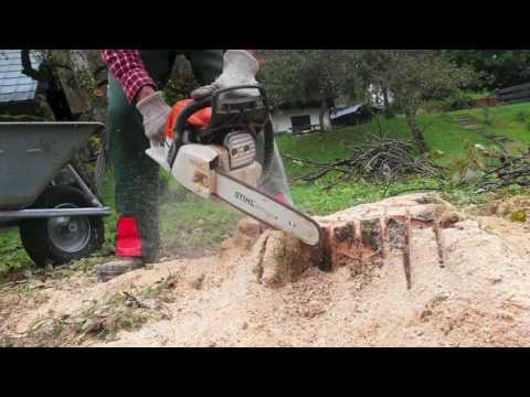 Tree stump removal  Stihl MS 231