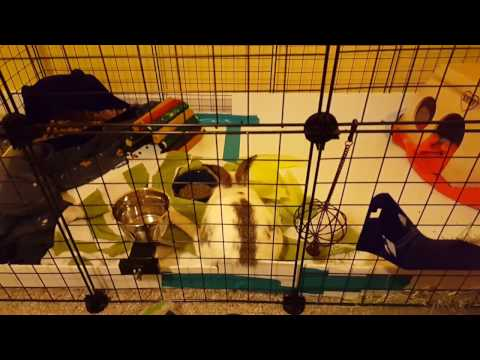 Updated DIY Bunny Cage Setup