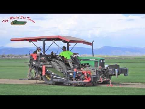Turfmaster Sod Farm a Colorado Sod Farm and Wyoming Sod Farm
