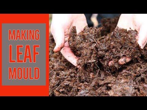 Making leaf mould with The Paraplegic Gardener