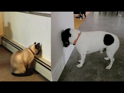 If Your Dog Or Cat Ever Does This, You Must Take Them To The Vets IMMEDIATELY!