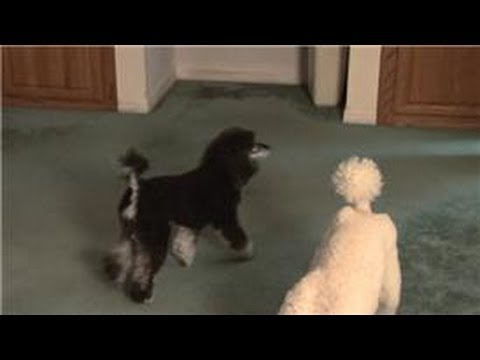 Carpet Cleaning : Home Remedy for Getting Pet Odor Out of the Carpet