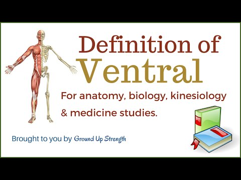 Volume And Surface Area Lateral Surface Definition Biology