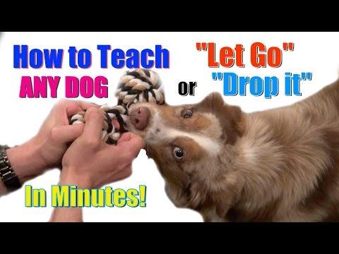 How to Teach ANY DOG