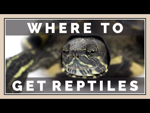 Where Should You Get Pet Reptiles?