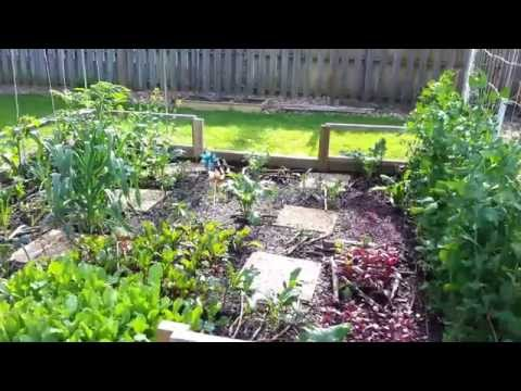 2015 Garden update - May 6th