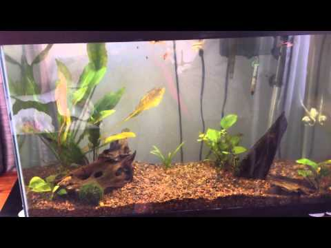 Updates! New fish tank, & Meet my new dog!