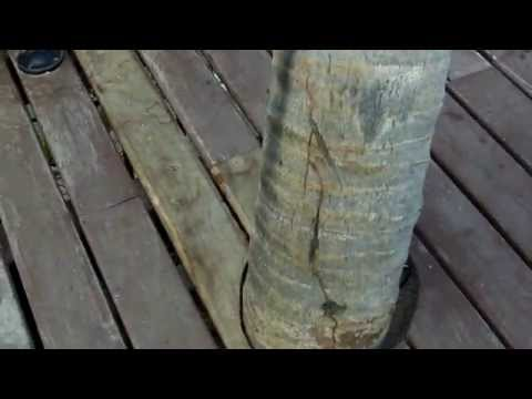 Charlotte Home Inspector Show Some Formosan Termites