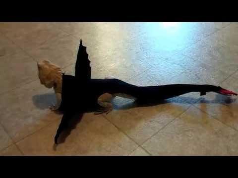 Toothless costume on Cinnamon the Bearded Dragon