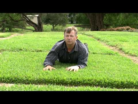 Choosing The Right Turf For Your Situation In Australia