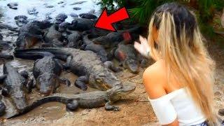 I got too close to alligators...